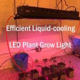 LED는 나물을%s 가볍게 또는 의약 플랜트 또는 야채 증가한다