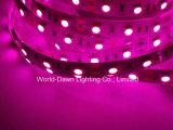 Striscia flessibile di alta luminosità LED con approvazione del Ce per colore dentellare
