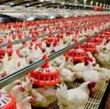 Conjunto completo de capoeira Galpão de Controle de Equipamentos para matrizes de frango
