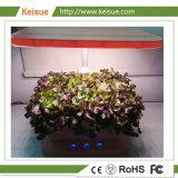 Keisue LED 야채 또는 꽃 마이크로 컴퓨터 농장