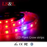 Tira completa de la iluminación del crecimiento vegetal del espectro con color azul y rojo