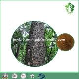 Extracto de casca de pinho antioxidante 100% natural, 95% de pó de proantocianidinas
