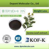 Senna Leaf Extract, Sennoside a + B 20% HPLC