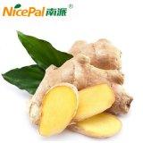 Poudre de jus de légumes au gingembre naturel séché par pulvérisation