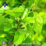Het natuurlijke Groene Koper van het Natrium van het Uittreksel van de Kleur Chlorophyllin E141