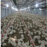 プレハブの鉄骨構造の鶏の家禽育成の家