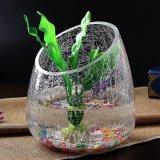 Forma de bola Unicolor Crackled florero de vidrio