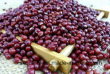 Китайский небольших красных бобов