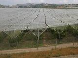 ブドウの木果樹園の反あられのネット