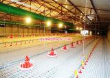 Equipamento automático personalizado da exploração avícola para a linha de alimentação da galinha de grelha