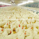 Volles Set Automatic Poultry Farming Equipment für Breeder House