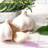 Чеснок качества еды свежий чисто белый
