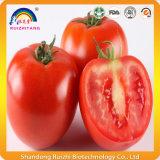 Tomate-Auszug mit dem 10% Lykopen