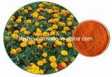 熱い製品のマリーゴールドの花Extract ゼアキサンチン5~20%のルテイン5%~80%