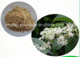 Pure Natural Thunder God Vine Extract, Triptolide 98%, 10: 1 ~ 30: 1