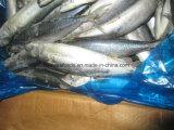 De Chinese Prijs van de Makreel van de Makreel van de Fabriek Prijs Bevroren Vreedzame