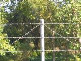 中国の卸し売り品質によって電流を通される単一か二重有刺鉄線