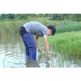 Divers La plantation de riz de bottes de travail de l'agriculture fabricant bottes