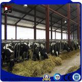 La ferme avicole préfabriquée de structure métallique de constructions a jeté pour la vache, porc