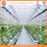 De multi Plastic Serre van de Spanwijdte voor het Planten