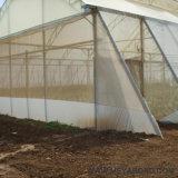 Réseau de maille d'insecte de HDPE pour le produit de plastique de serre chaude