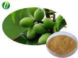 Высокое качество оливковых экстракт листьев Oleuropein 20%-98%