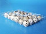 24 cartones del huevo de codornices de los orificios que empaquetan para 24 huevos de codornices del PCS