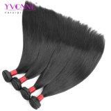 Estensione brasiliana superiore dei capelli umani dei capelli diritti dei capelli dei 100 Virgin dei capelli di modo di Yvonne