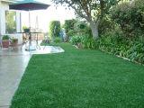 China Cheap Landscaping Grass für Sale