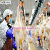 Stufa calda di scoppio per bestiame in nessun azienda agricola di pollo standard