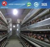 Ferme avicole complètement automatique de cage de poulet de couche de batterie
