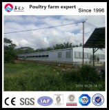 Alimentation des animaux de grande portée Structure de tramage légère en acier de construction de la volaille maison de ferme de la construction de délestage de poulet pour la vente