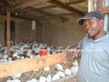 Сельское хозяйство сельское хозяйство птицы куриное яйцо инкубатор хэтчбек машины для продажи