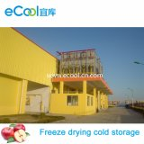 O armazenamento frio super de secagem de gelo do grande tamanho super e temperatura da capacidade da baixa e Refrigerate o equipamento para vegetais e frutas