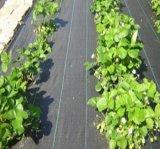 De PP agrícolas Tecidos de malha de Paisagem Tapete de controle de plantas daninhas em rolo Pano Anti-Grass