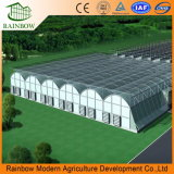 AgricultureまたはHorticultureのためのStructureプレハブのMultispanのPE Film Greenhouse