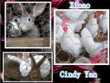 ウサギの塀および鶏の網のための六角形の金網
