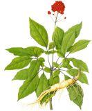 Extracto de hojas y tallos de ginsenósidos para alimentos, bebidas