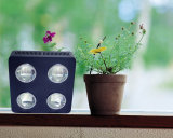 Full Spectrum 500W Plant Grow LED Grow Lights for Basil-Greek