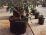 反紫外線32L耐久のプラスチック植木鉢(8.4ガロンボリューム)