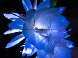 Greensource 의 꽃을%s 열전달 필름