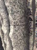 G623 granito grigio-chiaro poco costoso, pietra per lastricati delle mattonelle del granito