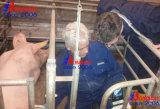 De veterinaire Scanner van de Ultrasone klank van het Ziekenhuis Paarden, Runder, Katachtige Obvine, Honds, Veterrinary Apparatuur, het Instrument van de Dierenarts, Veterinaire Echoscopie