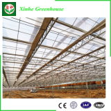 Invernadero de cristal grande agrícola para la seta/los tomates/las flores