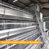Cages d'oeufs de poulet de ferme avicole de Tianrui