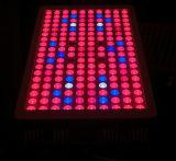 In het groot 600W leiden kweken Licht Systeem voor Installaties