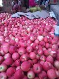 Neues Getreide-rote Gala Apple von China