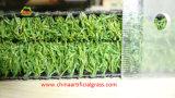 Proveedor profesional de césped sintético para el green