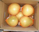 De verse Zoete Chinese Vruchten van de Pompelmoes