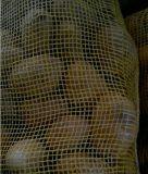 Neues Crop Fresh Potato für Bangladesh Market